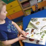Przedszkolak ogląda książkę