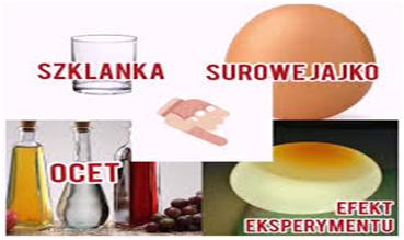 eksperymenty z jajkiem